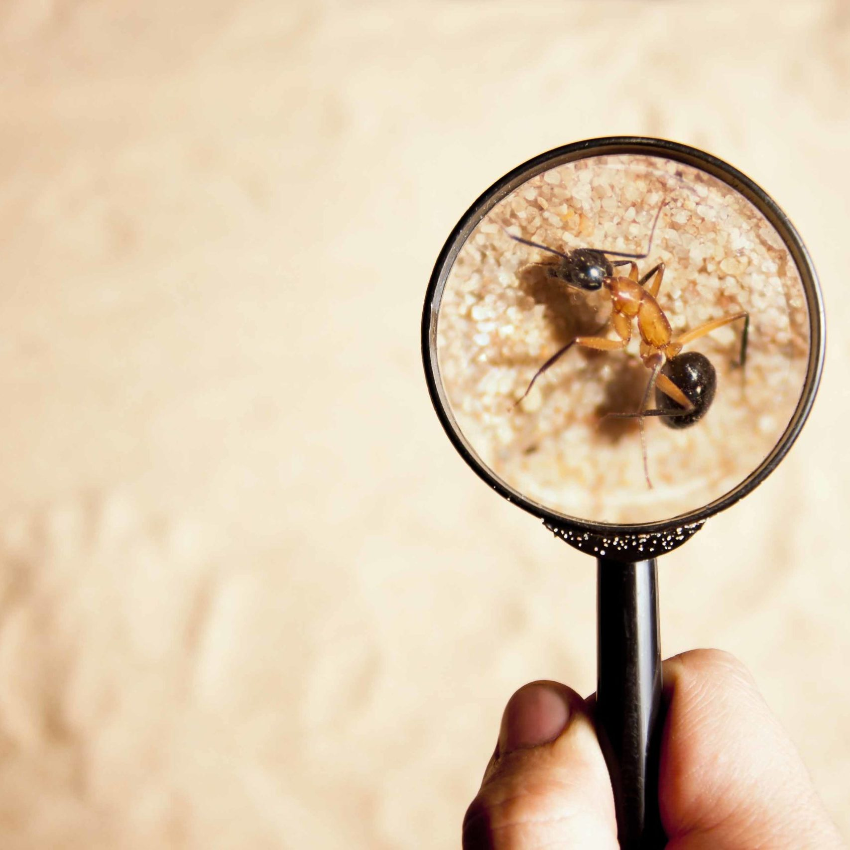person looking an ant with a magnifying glass